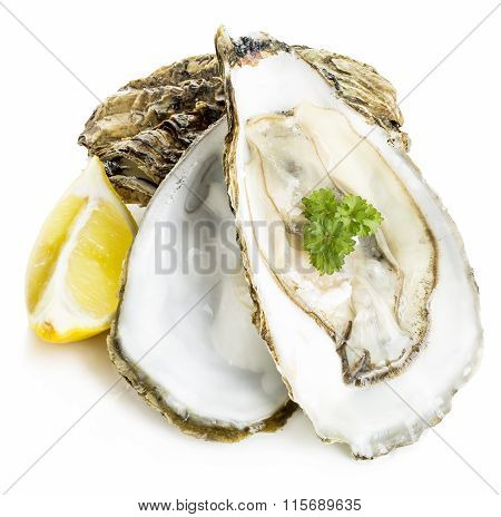 Oysters With Lemon And Parsley Close-up Isolated On A White Background. Seafood.