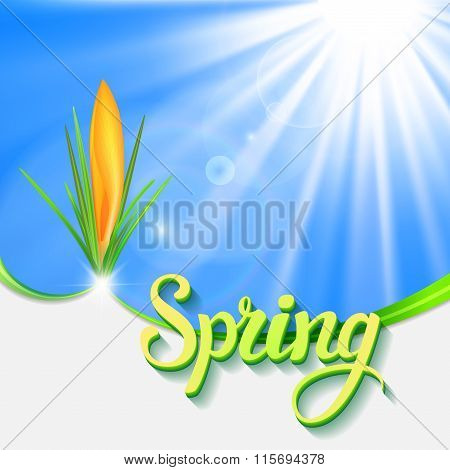 Greeting Card With  Crocus And  Text Spring
