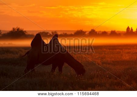 Silhouette Of Camel Eat Grass At Smoke Sunset