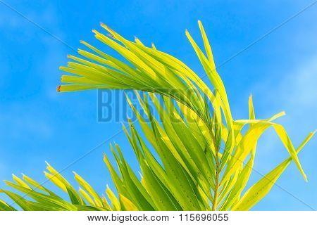Palm Leave On Blue Sky Background