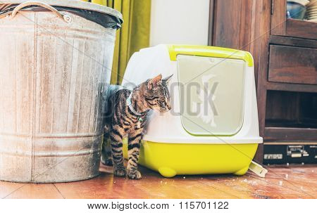 Striped Grey Tabby Standing Alongside A Litter Box