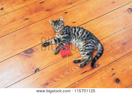 Pretty Grey Striped Cat Lying On A Wooden Floor