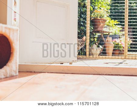 Young Tabby Kitten Staring Around A Door