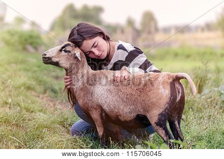 Woman Is Stroking A Brown Sheep