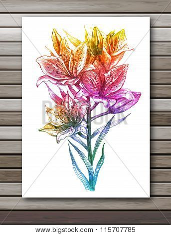 Lily flowers on white background. Colorful vector, EPS10.