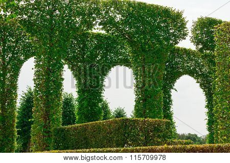 Beautiful Garden With Green Hedges