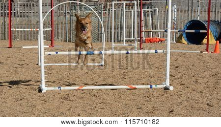 Dog agility: jumping