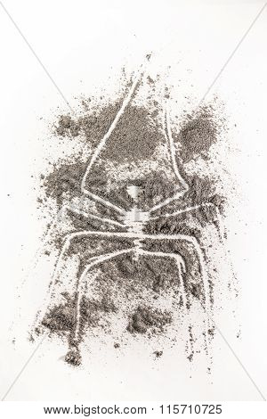 Spider Drawing Made In Ash
