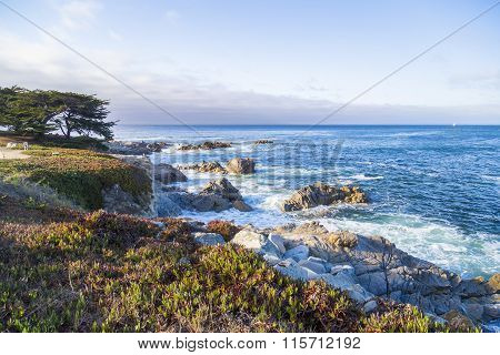 Seascape Of Monterey Bay And Cypress Trees At Sunset In Pacific Grove, California, Usa
