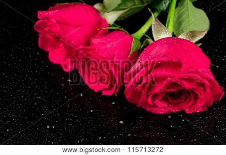 Bouquet of three roses with dew drops on a black background