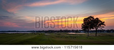Geese Eating On Golf Course At Sunset