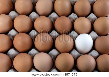An Egg White Into Brown Eggs, Visible Minority