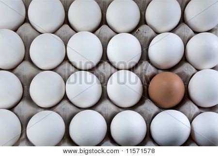 An Egg Brown Into White Eggs, Visible Minority