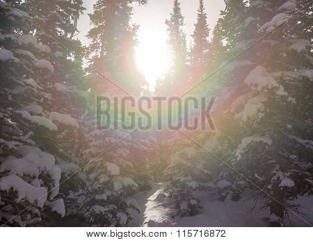 Sunburst Through Snow Covered Trees