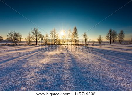 Winter Field With Withered Trees