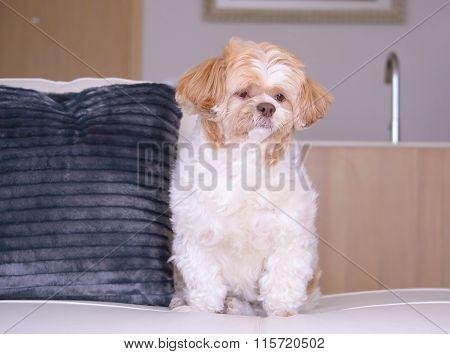 Lovely Dog Just Relax In Condominium