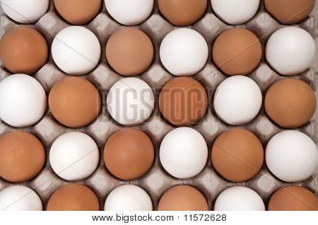 Alernative White And Brown Eggs