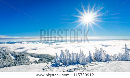 Sun shine over Snow and Ice covered Trees in the High Alpine
