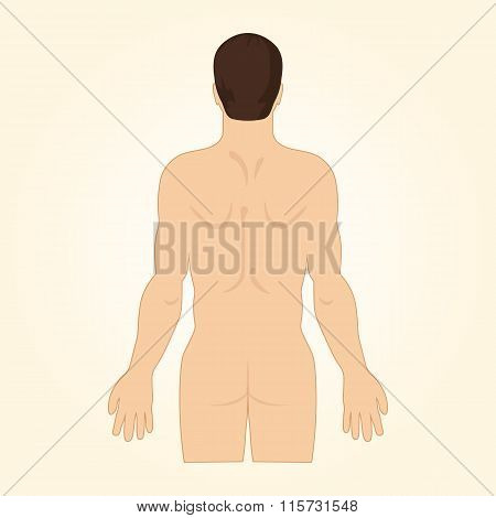 European Man Standing Back Naked. View Up To Hips.
