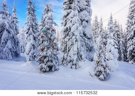 Christmas decorations on snow covered pine trees in the forest
