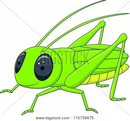 Cute grasshopper posing isolated on white background
