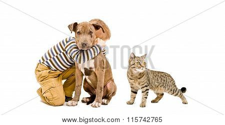 Boy, pitbull puppy and cat together