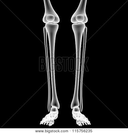 Human Legs with Knee Joints
