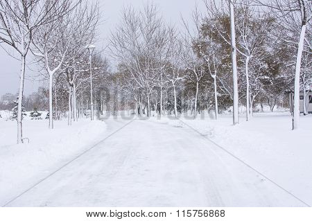 Park Road Covered In Heavy Snow