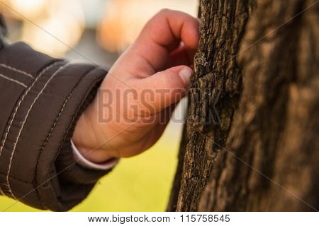 Hand of a young child touching tree bark   curious