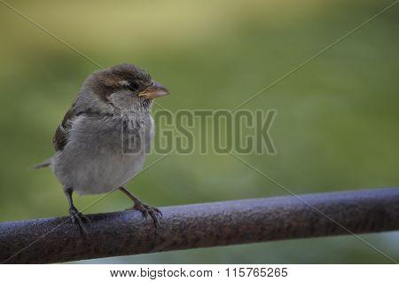 Bird On The Nature
