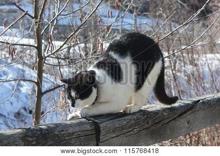 Cat in the nature.