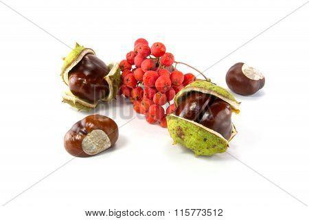 Chestnut And Rowan