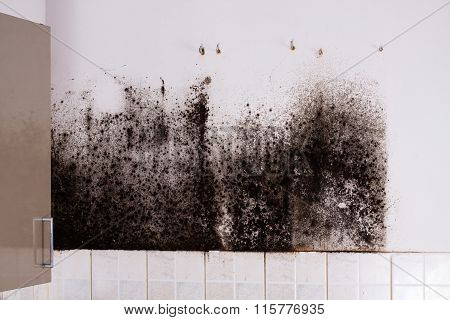Mold problem and the mycelium (fungus).