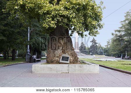 Poplar. Volgograd, Russia