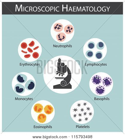 Microscopic Haematology