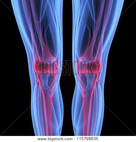 Knee Joints with Muscles
