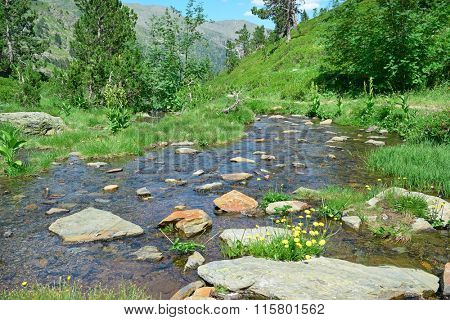 Scenic stream in the mountains