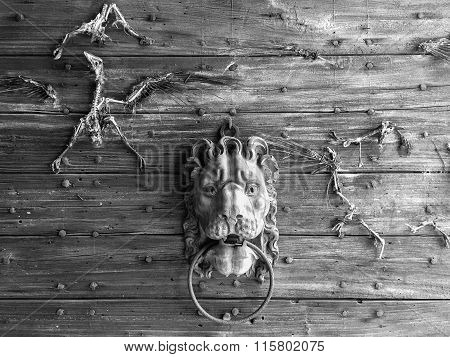 wooden portal with lion knocker and bird skeletons