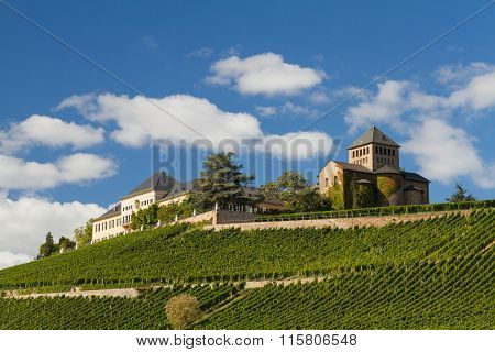 Vineyards At The Middle Rhine Valley