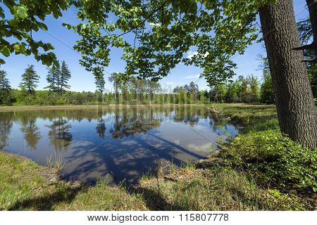Small Lake In The Forest, Southern Poland