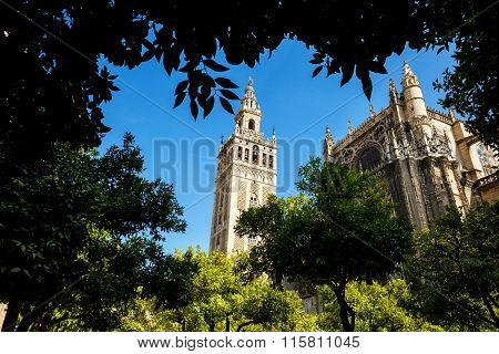 Tower Giralda  through the trees