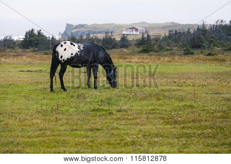 Horse in a Field on an Ocean Cliff