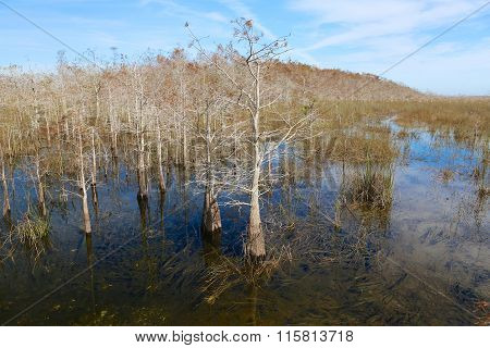 Forest In The Water Everglades