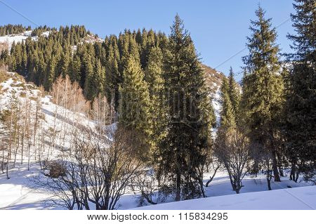 Winter In Tien Shan Mountains