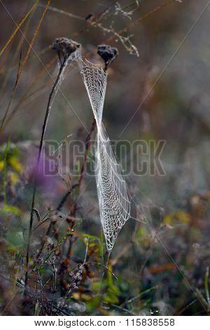 Spider web outdoor