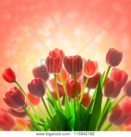 Fantastic Tulips holiday background with beautiful magic light