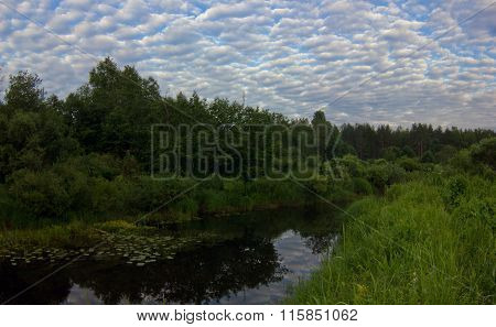 Summer evening on the forest river