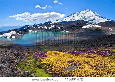 Mount Baker Summer Bloom