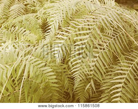 Retro Looking Ferns Picture