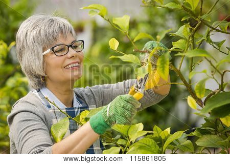 Beautiful mature woman taking care of the garden